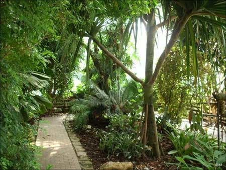 jardin_botanico_valencia.jpg