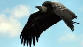 vista previa del artículo Día Mundial de las Aves