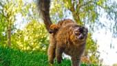 vista previa del artículo Nace en Bioparc una cría de lémur rojo, una especie en extinción