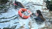 vista previa del artículo Leones marinos del Oceanografic podrían utilizarse en labores de salvamento