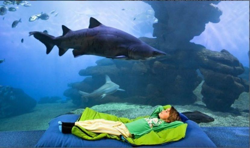 dormir tiburones