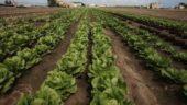 vista previa del artículo Valencia será la Capital Mundial de la Alimentación en 2017
